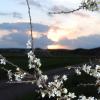 Hvidgren_solnedgang