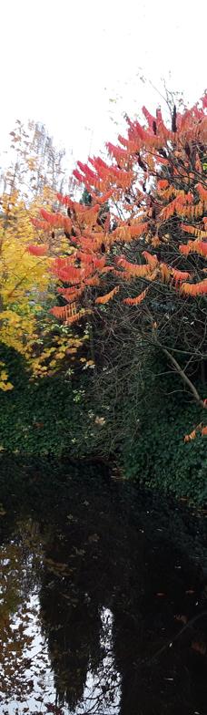 dam m efterårsfarver
